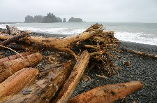 drift wood on Rialto Beach