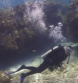 Russ diving at Bond Cay in the Berry Islands outside of Bimini (Click to ENLARGE)