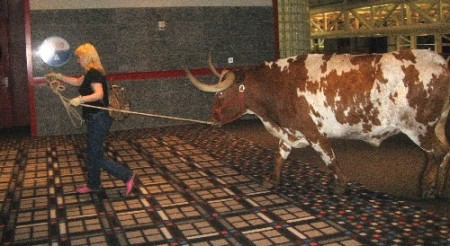 Steer retreats after convention duties
