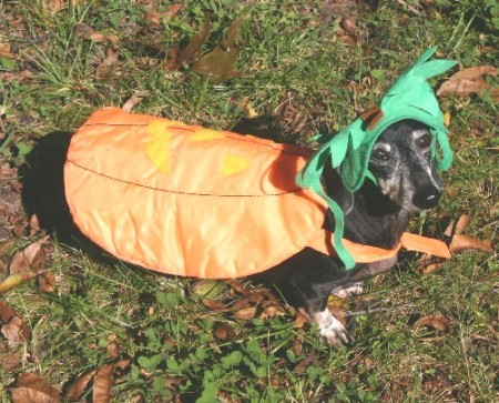 Roxy as the Great Pumpkin