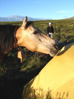 Horse Cody liked to nuzzle the tent. Throwing grass at him was effective for shooing him away, but he still managed to tear it.