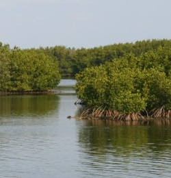 The Preserve has mangrove swamps with tidal creeks