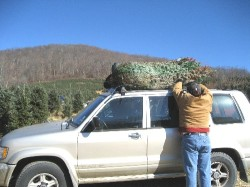 Man secures Christmas tree on car in western part of NC