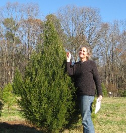Diane next to a Eastern red cedar that reminds her of her childhood