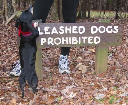 Roxy is convinced she doesn't have to be leashed