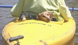 Roxy and Sabrina are completely relaxed during a kayak trip in Virginia