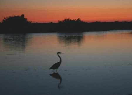 Heron during a PS sunset experience in Florida