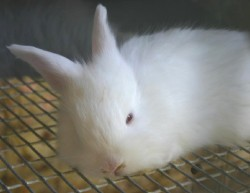 Albino bunny was baffled by all the visitors