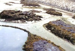 View of Yaquina Head Tidepools