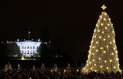 the the 2008 national christmas tree lights up the ellipse in front of the white house